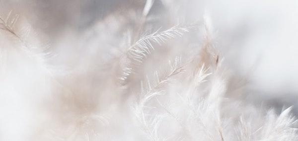 マットレストッパーの種類⑤羽毛(フェザー)